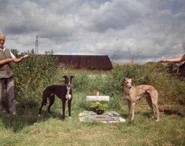 Observer dogs 2smaller B154.jpg