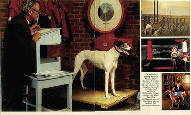 Observer Mag Dogs.jpg
