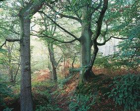 Braydon forest