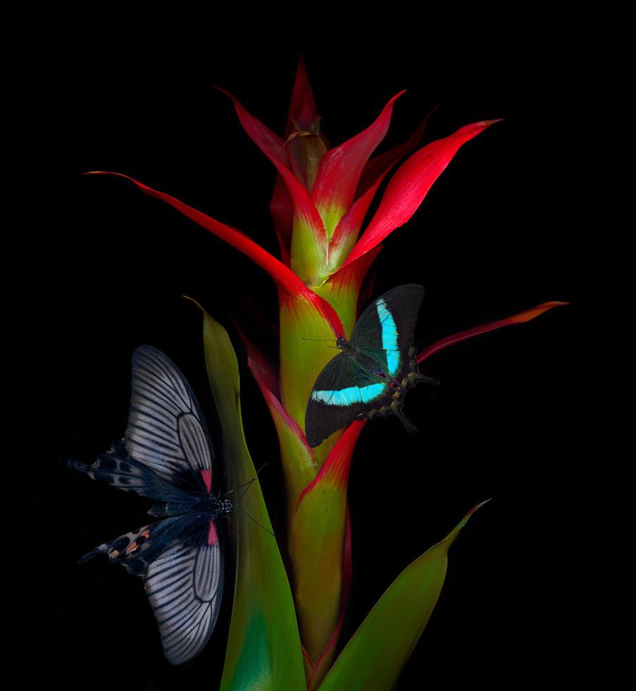 red spiky plantbutterfly.jpg