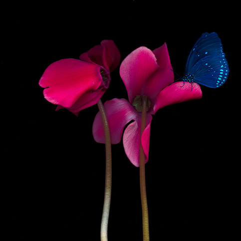 red flower 2with blue butterfly.jpg