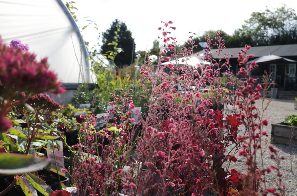 garden centre spring