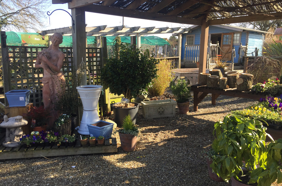 Garden Centre - Plants