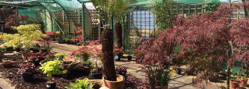 Garden Centre - Growing Tunnels.JPG