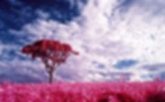 rosafarbene-fantasie,1440x900,46676.jpg