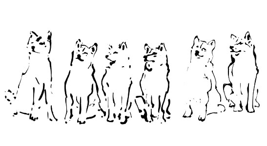 fox sumi ink