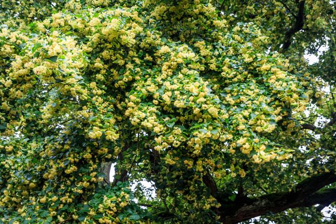 Lindt Tree