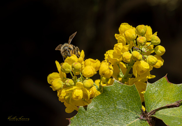 Bee in Spring