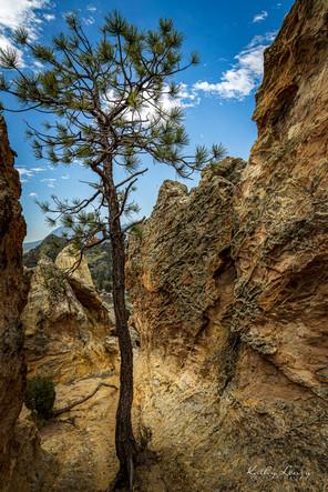 Tree and Rocks