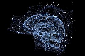 Cerveau-humain-brain.jpg