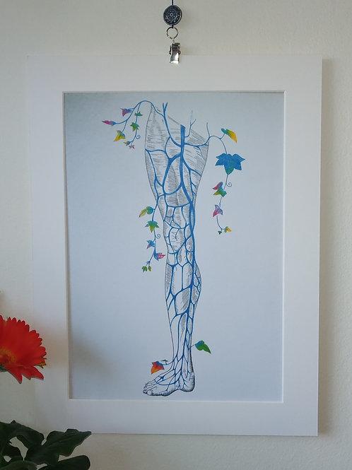 Superficial veins of the leg