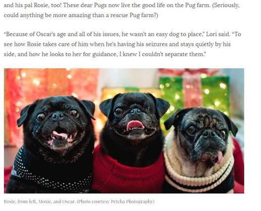 Lucky Puppy Magazine Article