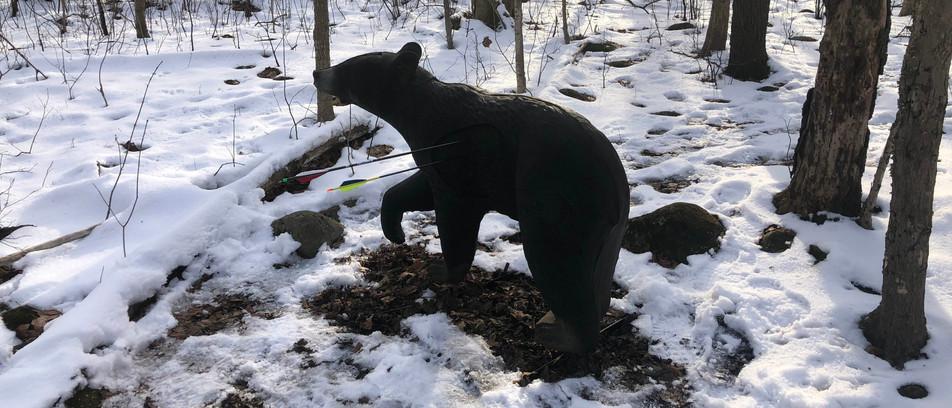 FCA_Black Bear.jpg