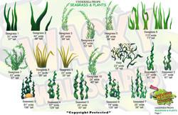 seagrass & plants