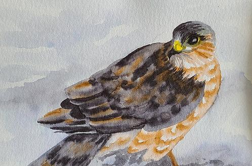 Ink Wash Painting: Hawk