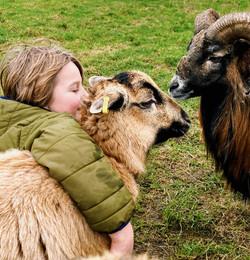 Own a Pet Sheep