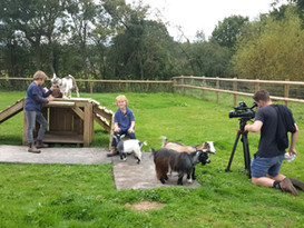 BBC filming our pygmy goats