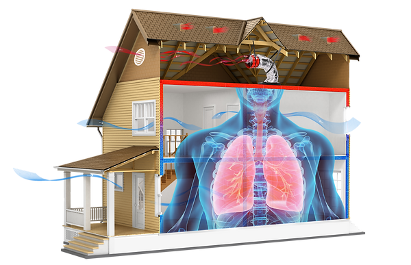 LungHouse-airflow-dormers.png