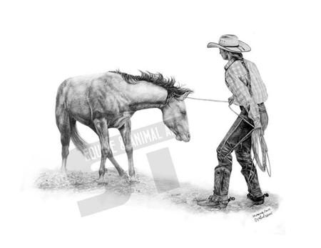 colt breaking