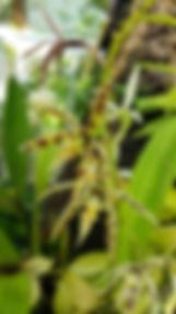 Plantentuin Meise, Plantenpaleis (20).jp
