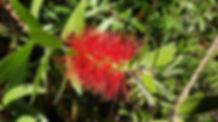 Plantentuin Meise, Plantenpaleis (15).jp
