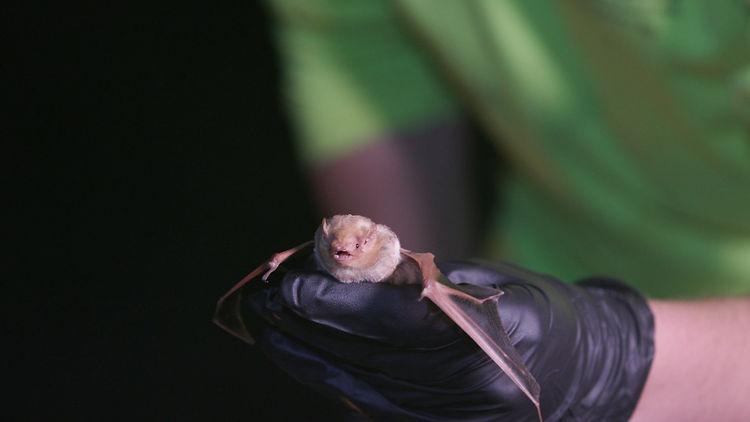 BatB.jpg