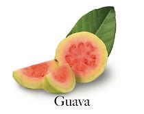 guava_f.jpg