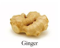 ginger_f.jpg