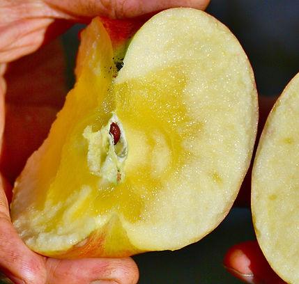 りんご割れ蜜画像.jpg