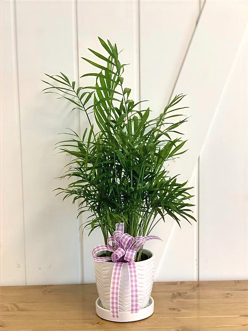 Table Top Palm - 4 inch
