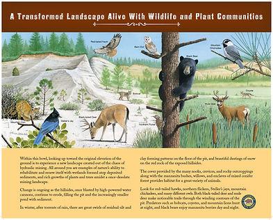 Wildlife composite