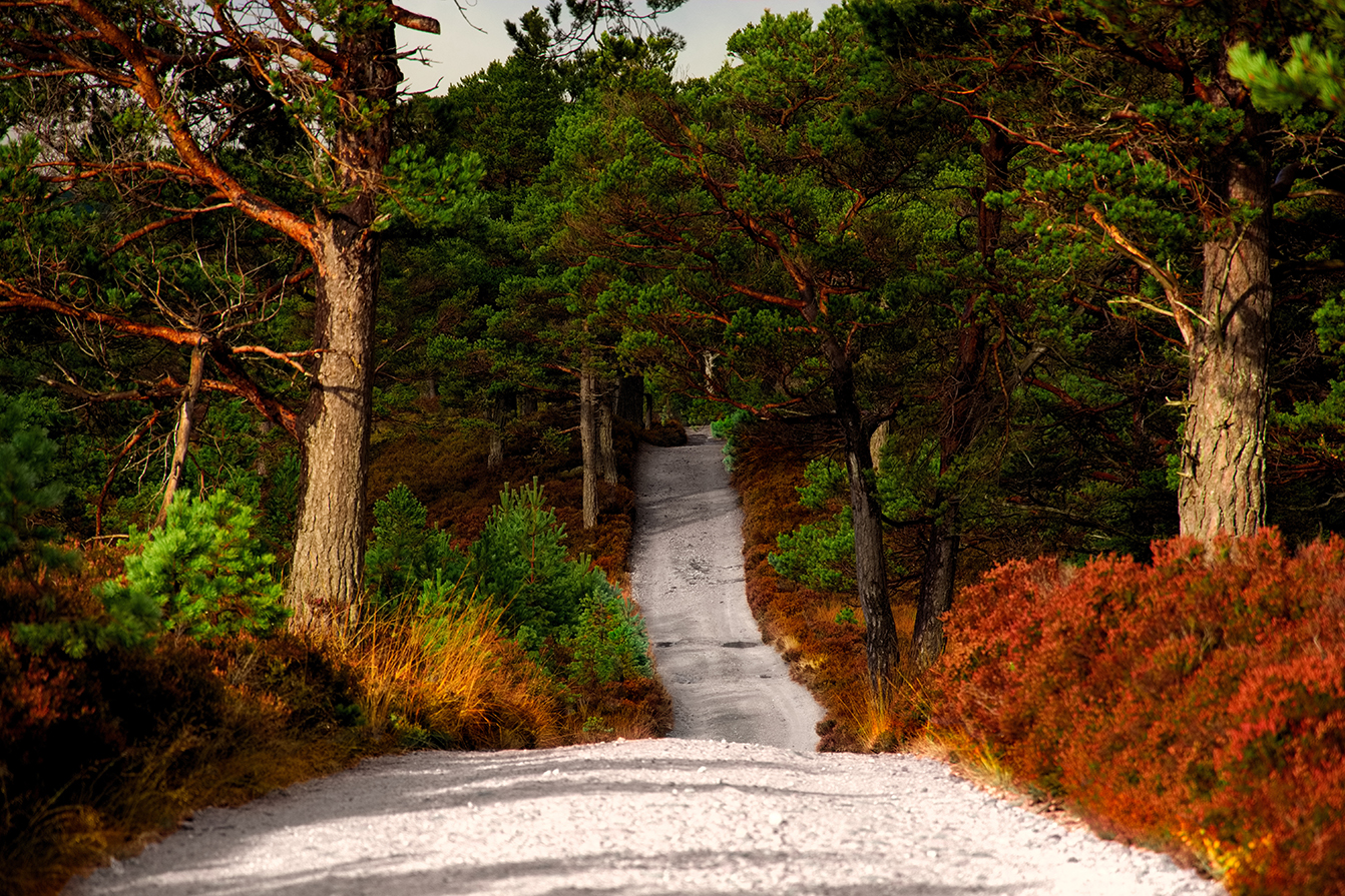 Track through Rothiemurchus Estate