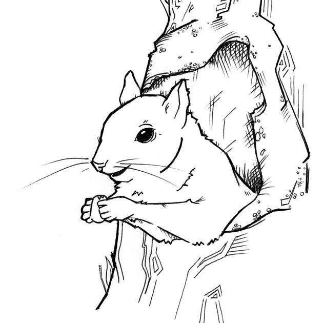 Sketch & Illustration