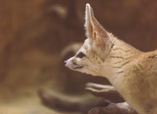 On becoming an author, naked, with a hide like a rhino, and ears like a bat-eared fox