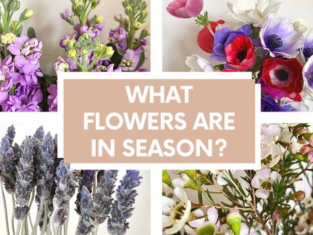 What's in season in Winter?