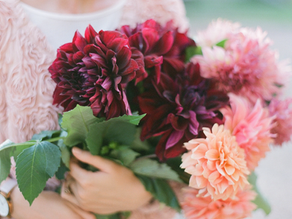 How to care for cut flower Dahlias