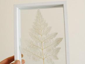 Pressed Flower Frames + 10% off!