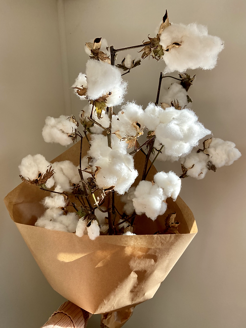 DRIED COTTON from