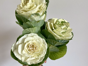 How to care for cut flower Ornamental Kale