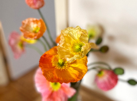 Flower care: Iceland Poppies