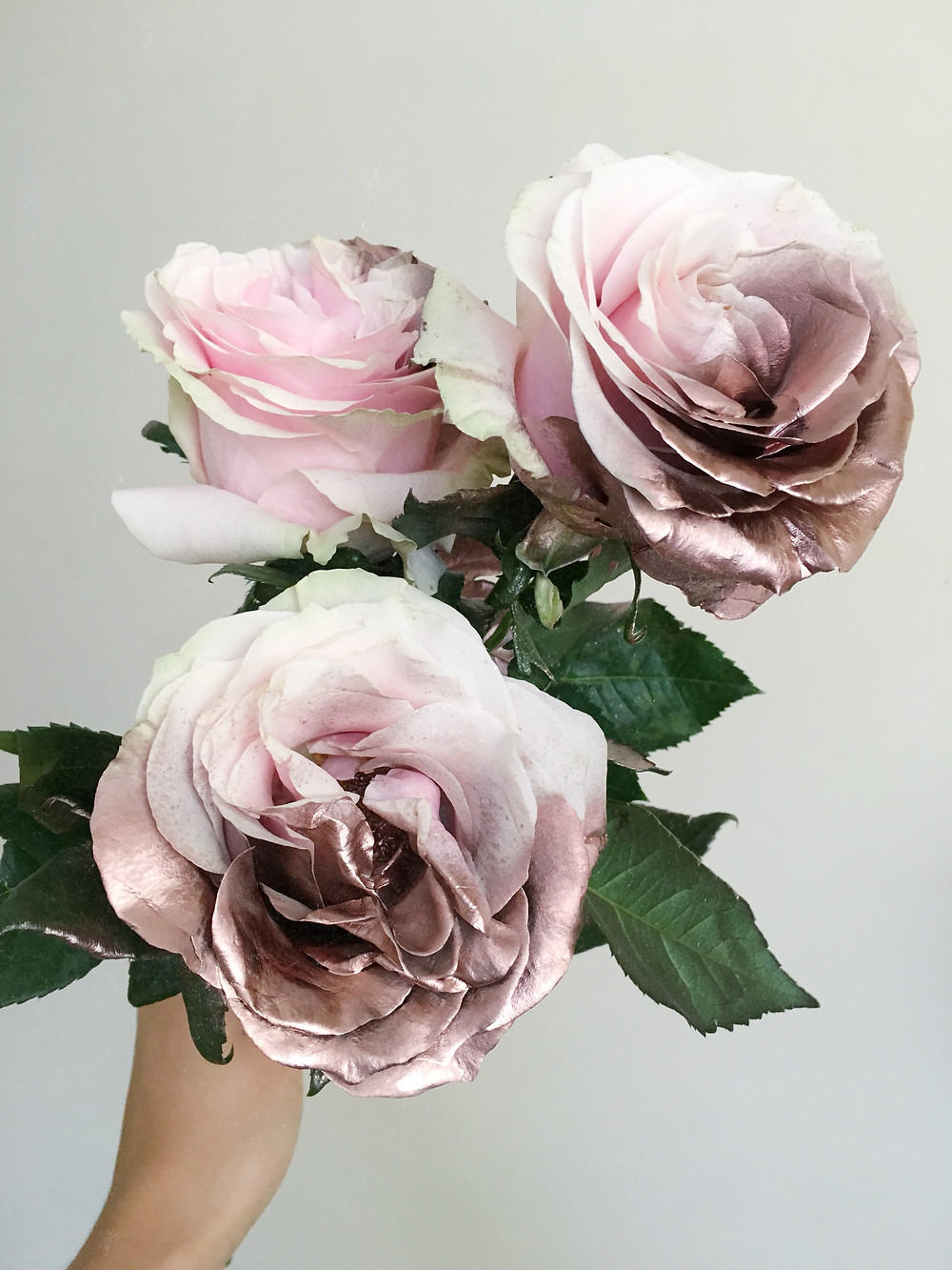rose gold roses