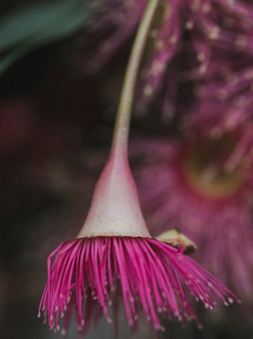 FINE ART FLORAL PRINTS from