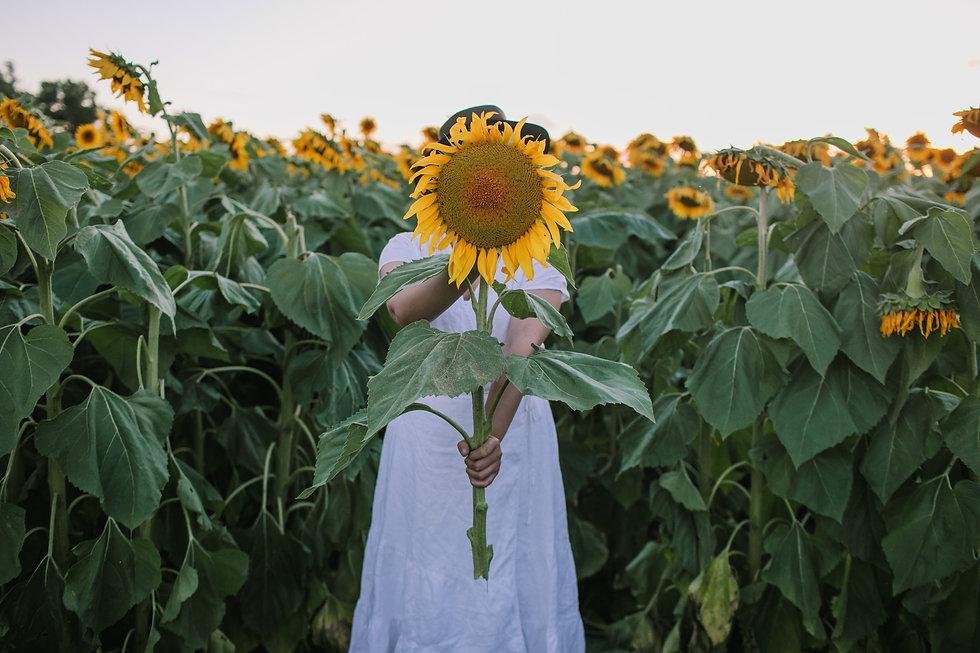 sunflowers-19.jpg