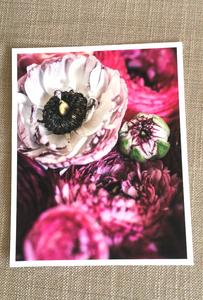 Fine Art Floral Print - Ranunculus