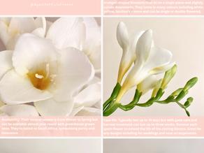 Flower Care: Freesias