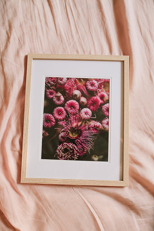 FLOWERING GUM BUDS PRINT