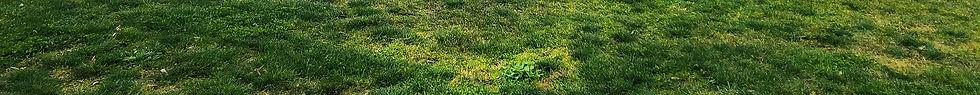 grass-at-hosken-reserve.jpg