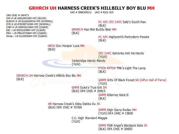 GRHRCH UH Blu MH pedigree.jpg