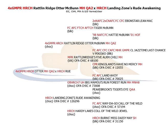 4xGMPR HRCH Otter MH QA2 x HRCH Rue.jpg