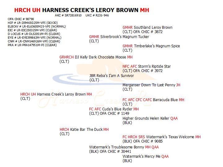 HRCH UH Leroy MH pedigree.jpg